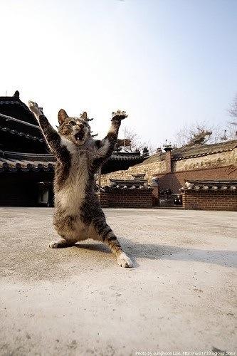 【猫画像】中国にいる猫のイメージ