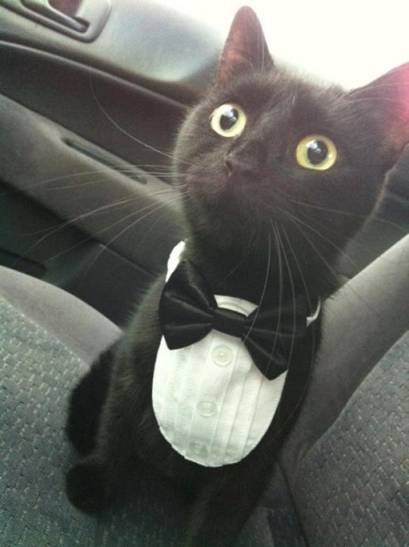 【猫画像】時にはキリッと!正装している猫たち 11選