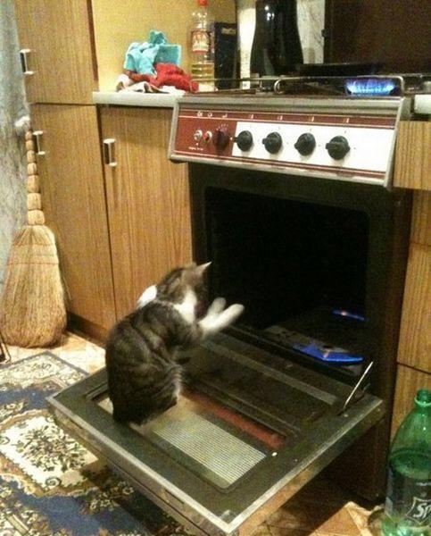 【猫画像】あー寒い