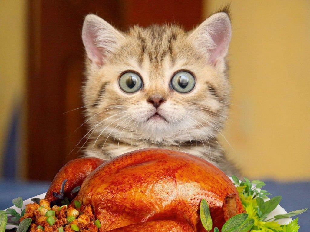 【猫画像】こんなにええのん!?