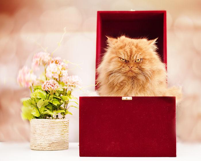 【猫画像】話題の不機嫌な猫「GARFI(ガーフィ)」の画像 8選!