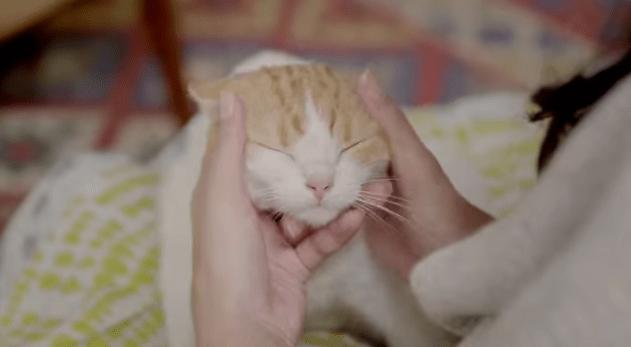 【猫動画】猫好きの心をくすぐる!ほっこりかわいい猫CM-ルビーナめぐり-