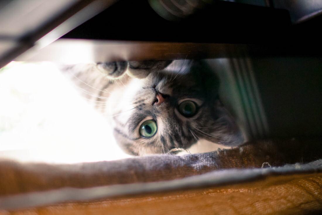 【猫画像】ここか〜