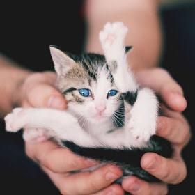 【猫画像】されるがまま