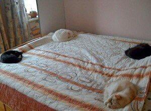 【猫画像】猫石