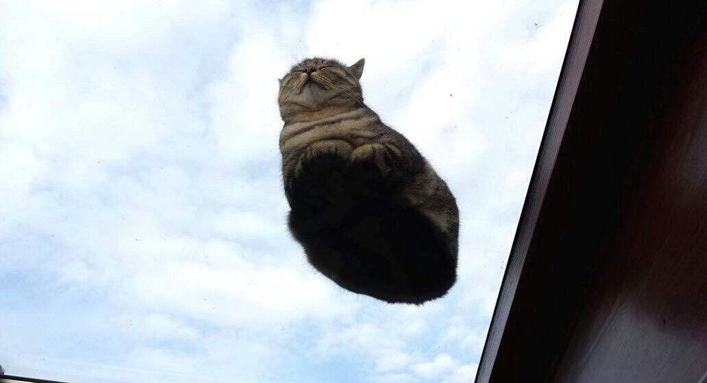 【猫画像】浮いてる!