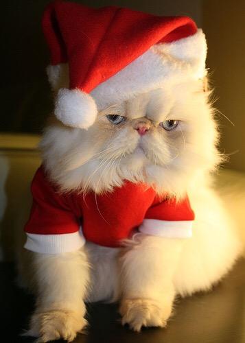 【猫画像】サンタ猫