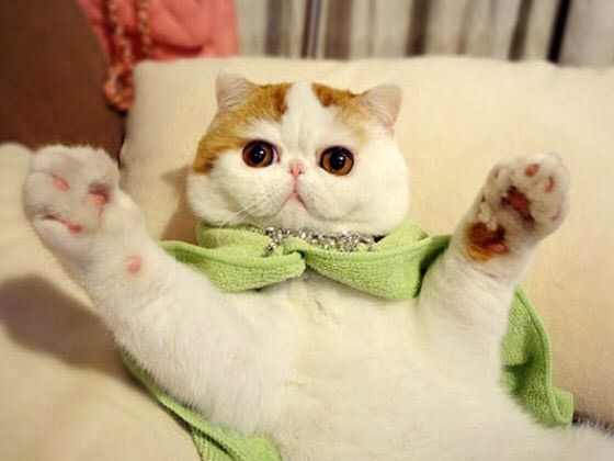 【猫画像】イエーイ!