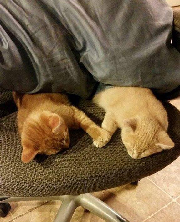 【猫画像】仲良くオヤスミ