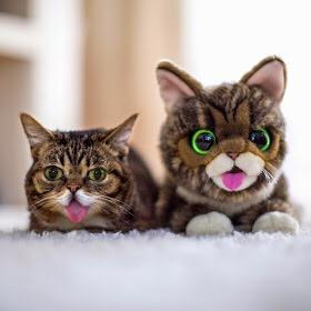 【猫画像】そっくりさん