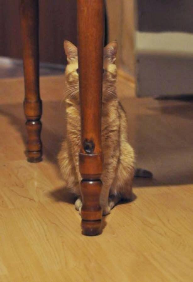【猫画像】隠れてるつもり・・・
