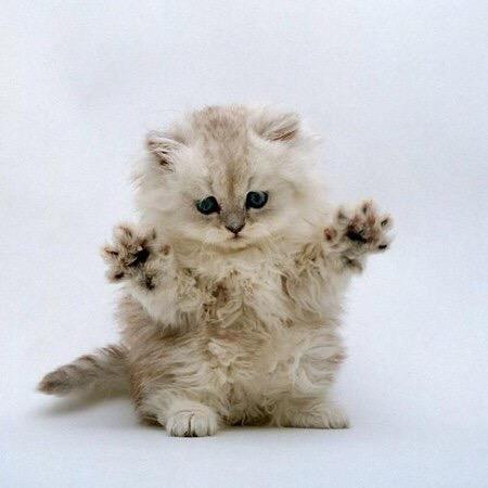 【猫画像】わぁ!