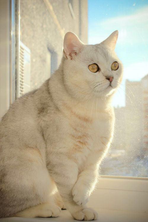 【猫画像】はっ!