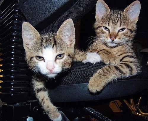 【猫画像】ワルそうなヤツら