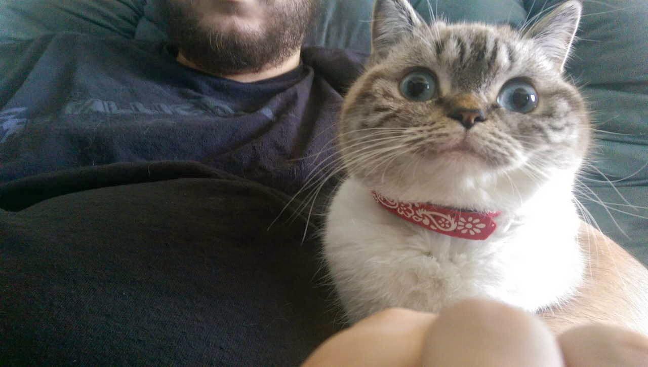 【猫画像】見下した感