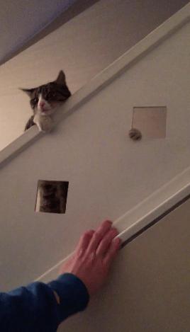 【猫動画】これはウケるW 階段で遊ぶ猫に起きたおもしろハプニングとは・・・!?