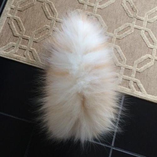 【猫画像】これは何?? パート1