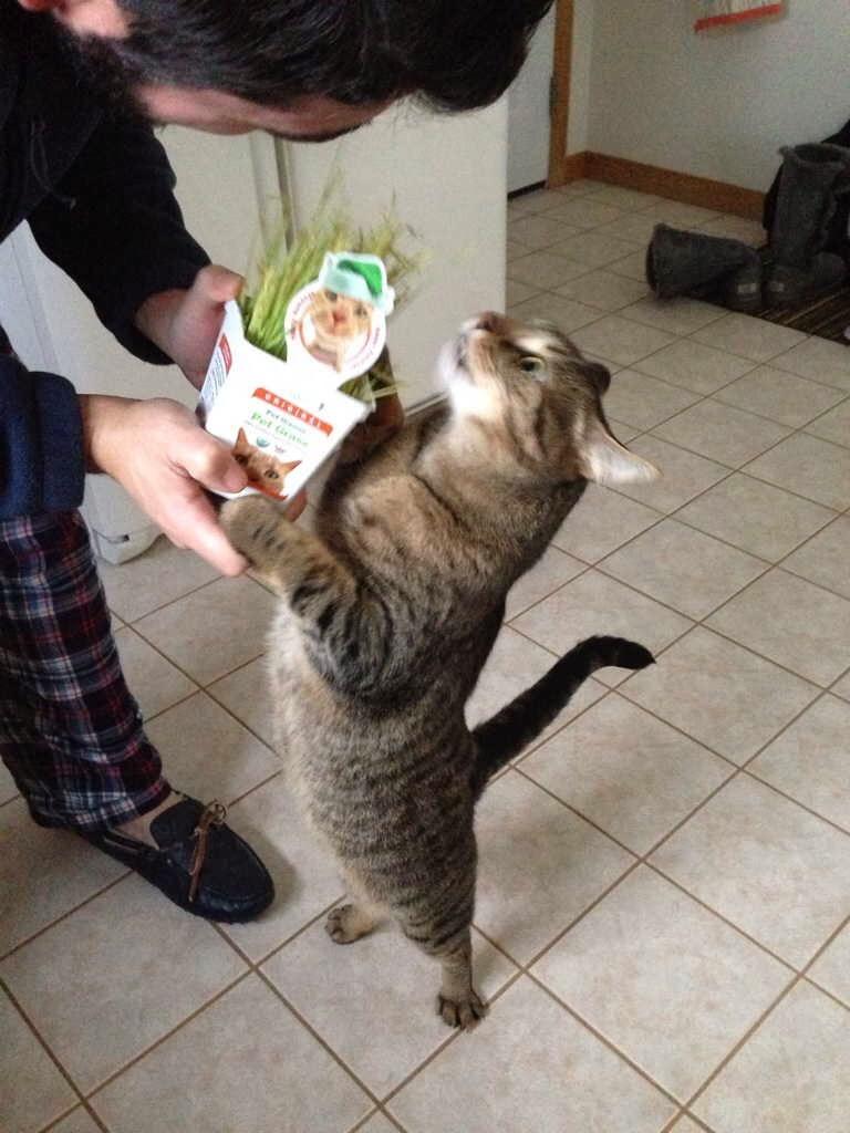 【猫画像】こんなにええの?