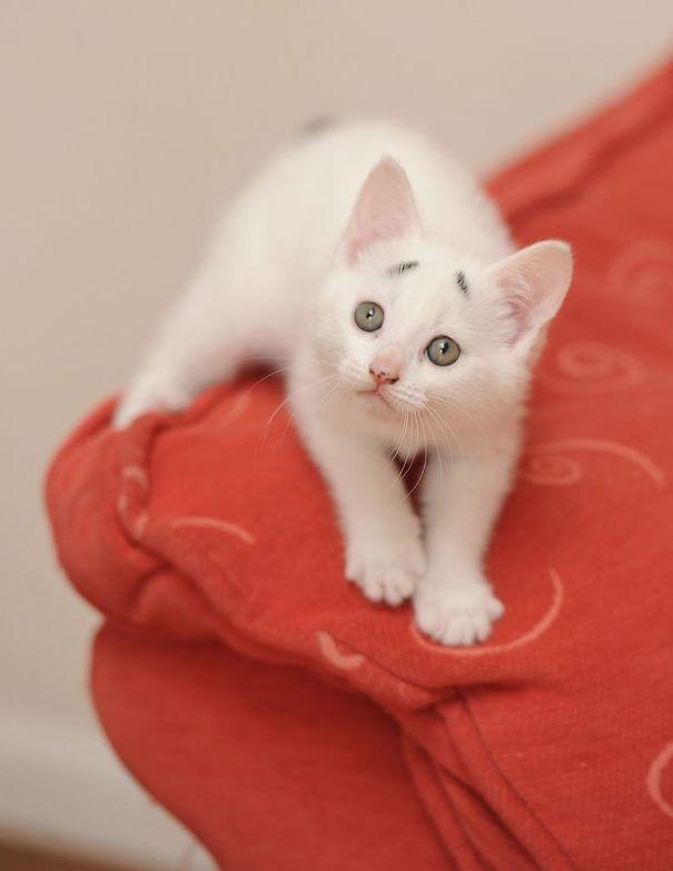 【猫ネタ】これは困った!?かなり困り顔な白い猫「ゲイリー(GARY)」 -CONFUSED KITTEN GARY-
