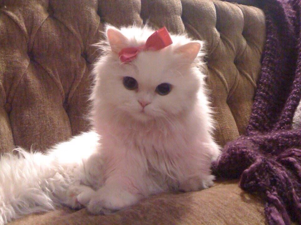 【猫画像】リアル キティちゃん?