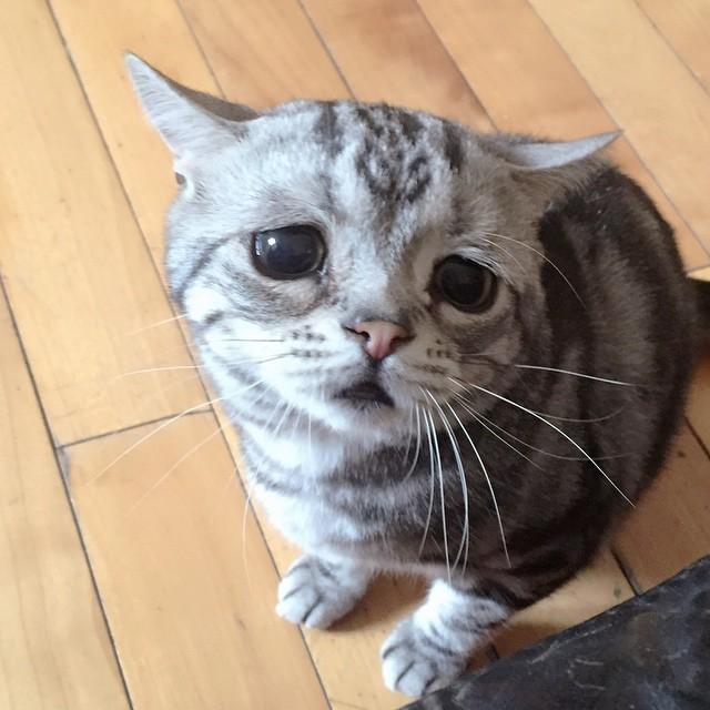 【猫ネタ】じわじわ人気が!?とてつもなく悲しい顔の猫「LUHU」ちゃんとは・・・