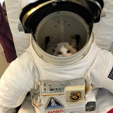 【猫画像】宇宙パイロット猫?
