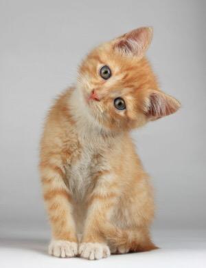 【猫画像】え?