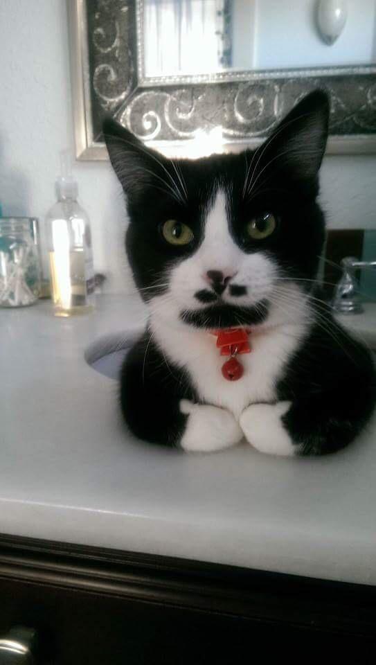 【猫画像】いらっしゃい