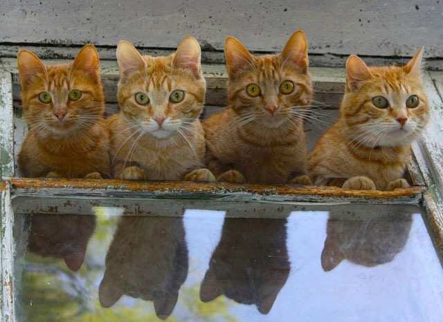 【猫画像】え?え?え?え?