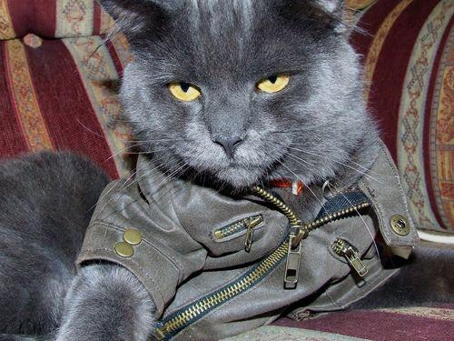 【猫画像】ハード系