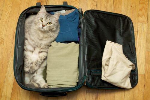 【猫画像】準備できた?