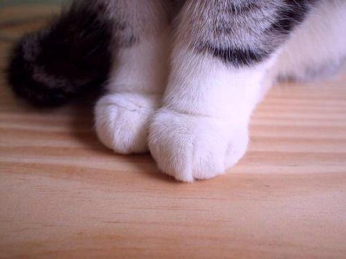 【猫画像】猫の手