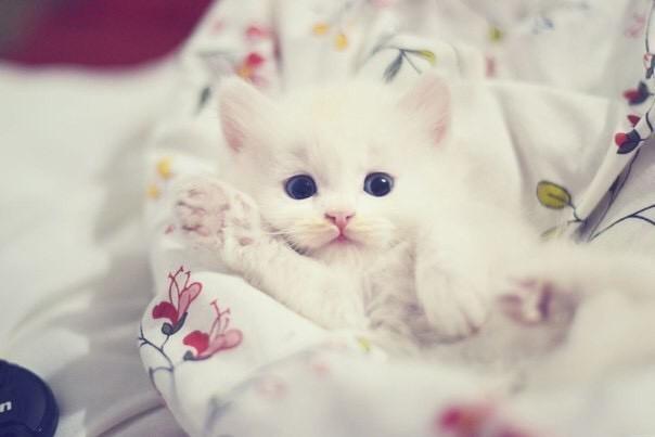 【猫画像】やぁ!