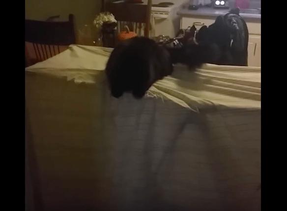 【猫動画】ん?猫の様子が変!?テーブルに乗った猫に起こった驚きのこととは・・・!?