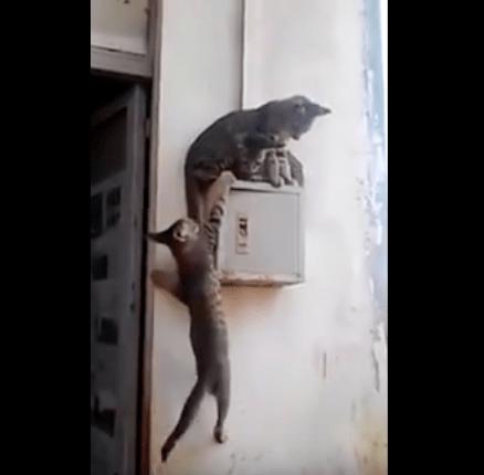 【猫動画】ヤバイ、落ちる!?ピンチの猫が最後の力を振りしぼって・・・!?