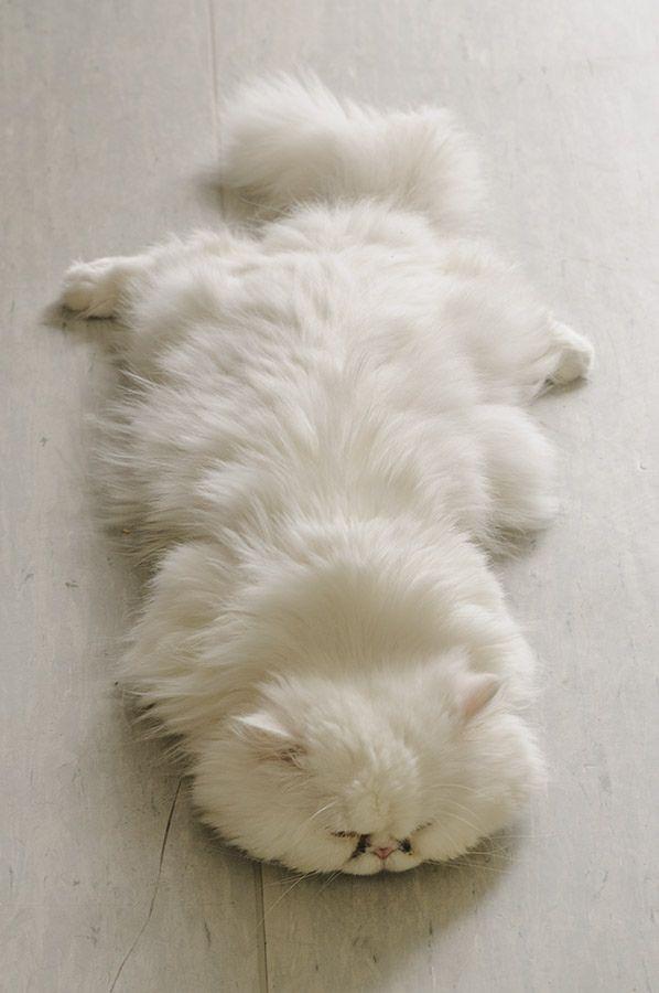 【猫画像】猫型ラグ