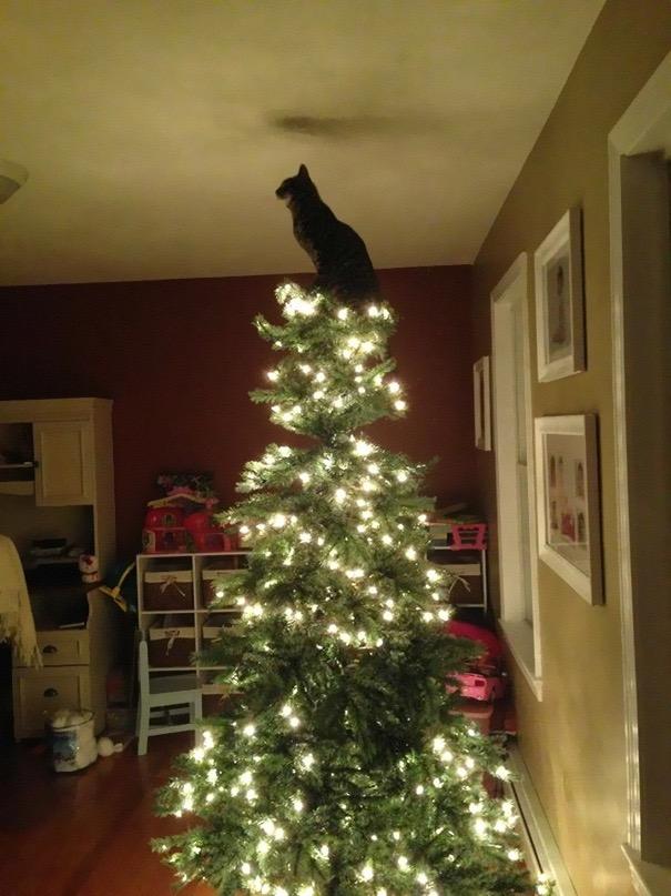 【猫画像】てっぺんの飾りは・・・