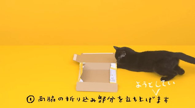 【猫CM】NGも可愛すぎる!!話題になった黒猫CMのNG集とは・・・!?