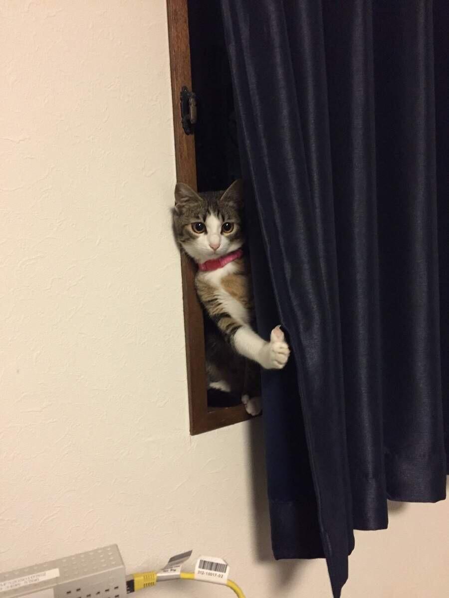 【猫画像】見ーたーでー