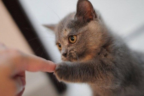 【猫画像】約束ね