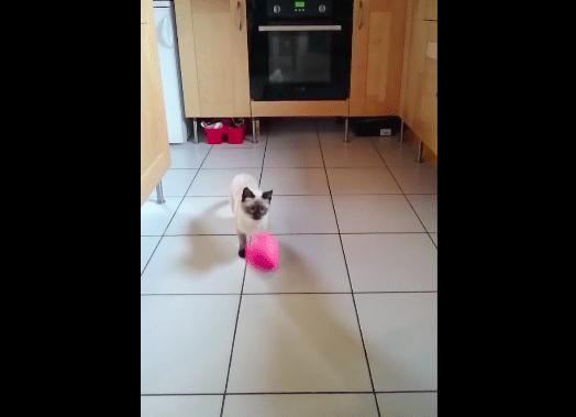 【猫動画】まさかのオチが!?スローモーションで見る猫の決定的瞬間とは・・・!?