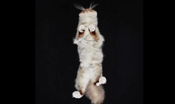 【猫ネタ】なかなか見れない猫の下側!?プロのカメラマンが本気で猫を下から撮影すると・・・!?