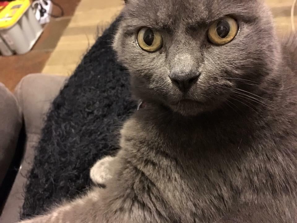 【猫画像】半信半疑