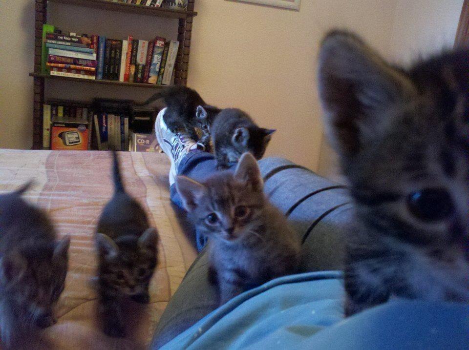 【猫画像】子猫の突撃