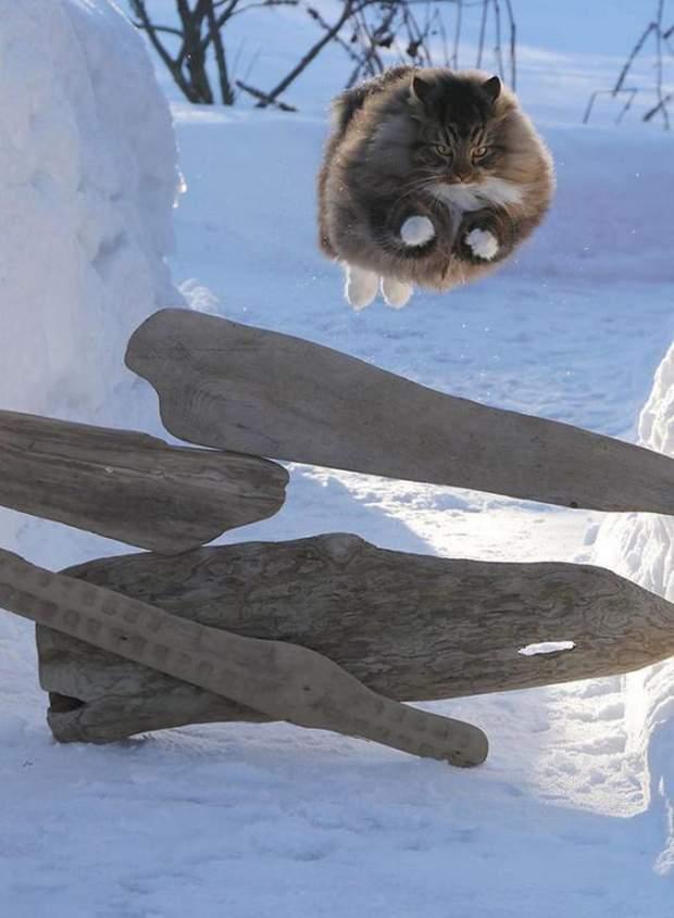 【猫画像】意外と跳べる?