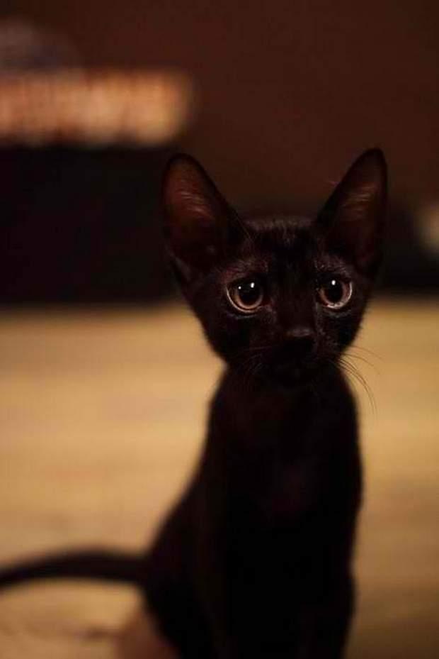 【猫画像】ちびっ子黒猫