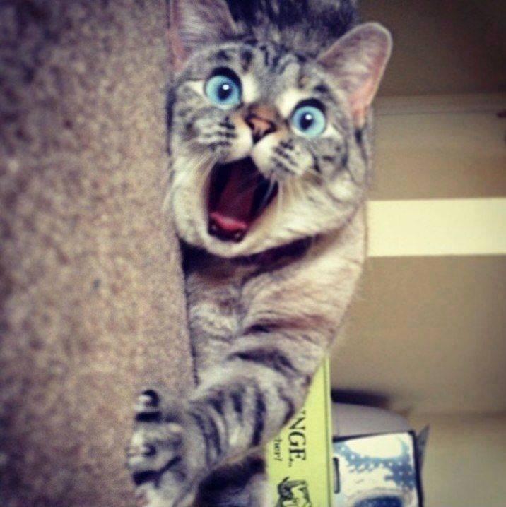 【猫画像】衝撃の瞬間!?