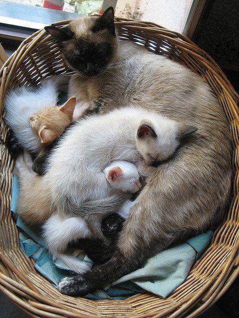 【猫画像】猫パズル