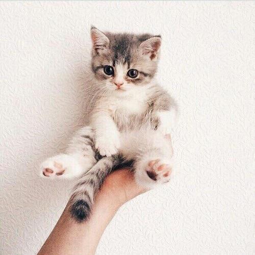 【猫画像】手乗り猫