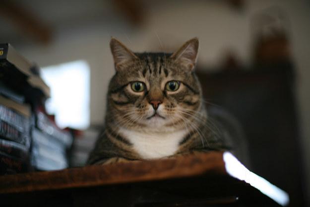 【猫画像】クワッ